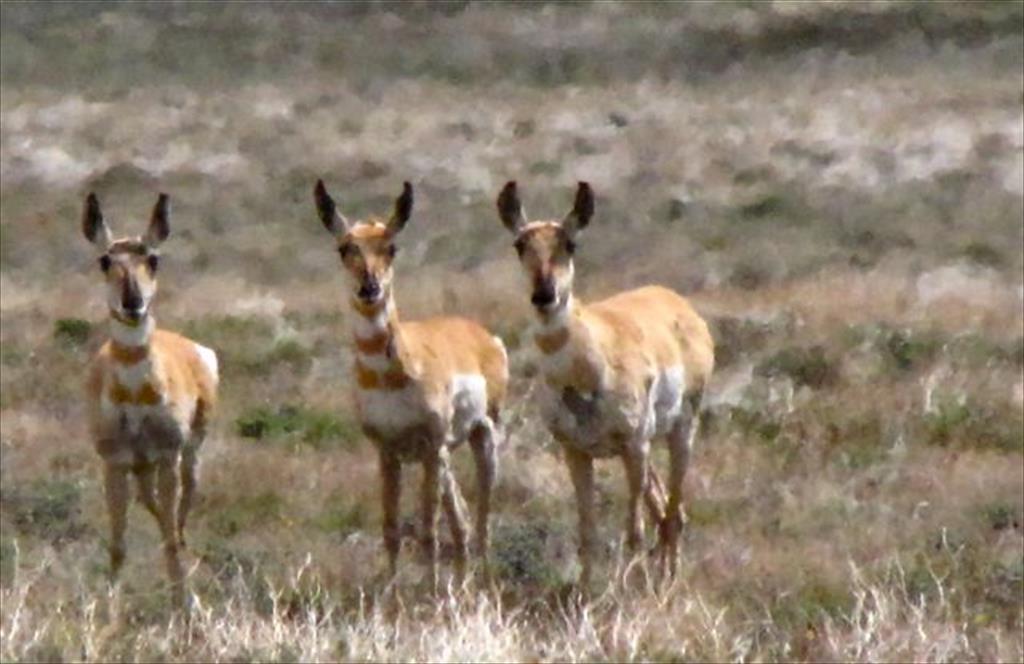 West of Hart National Antelope Refuge, Plush, OR